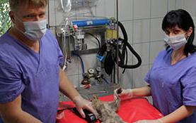 Állatkórház Békéscsaba